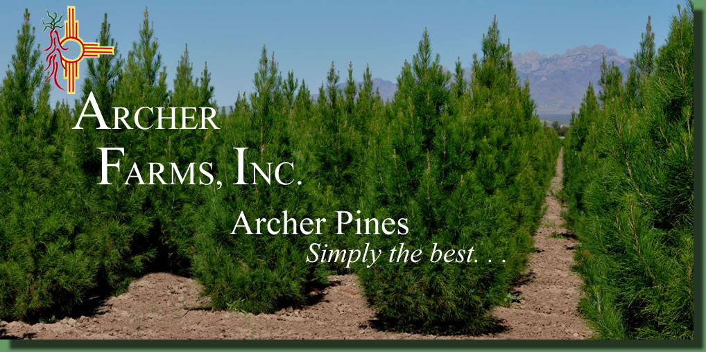Archer Farms Eldarica Pine Farm
